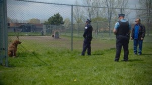 Fence Exercise from Police and Dog Encounters